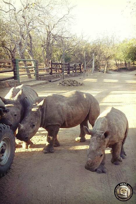 Rhinos - Khulula, Olivia and Nhlanhla
