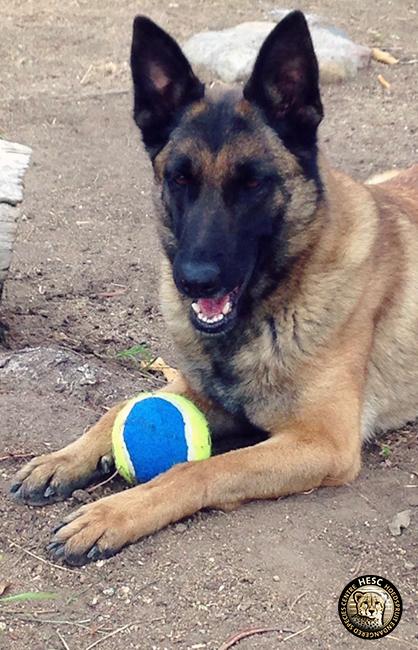 Zeta - anti poaching dog at HESC