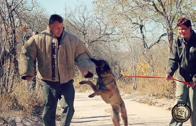 Zee - anti-poaching dog at HESC