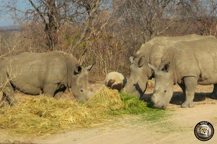 Gertjie, Matimba, Philippa & Lammie