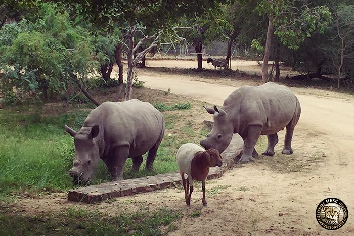Gertjie, Matimba & Lammie