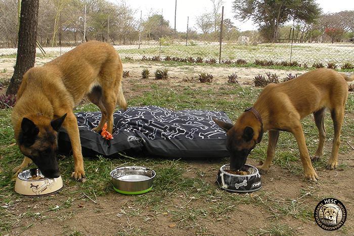 Anti-poaching dogs at HESC