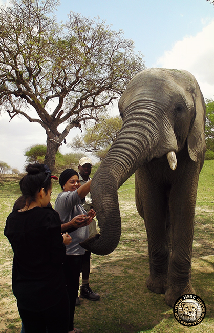 5-elephant-interaction