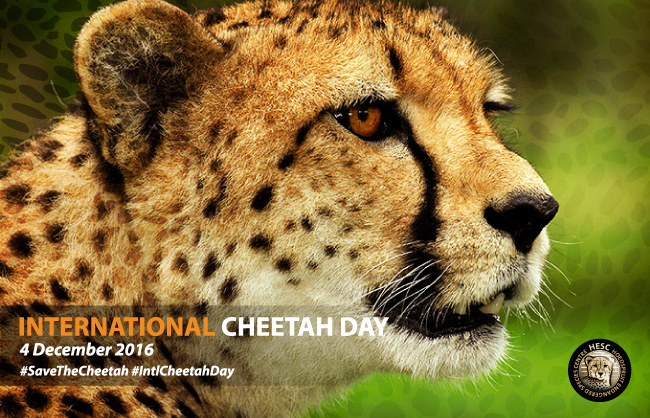 blog-int-cheetah-day
