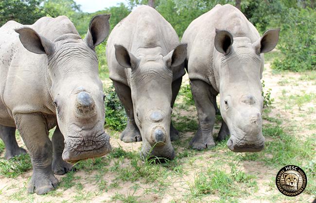 Gertjie, Matimba , Philippa - HESC