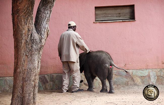 Elephants-Shawu-Biopsy-4-Apr-17--5