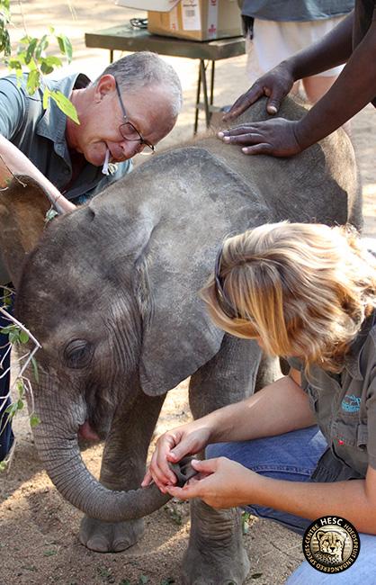 cj-elephants-shawu-scope-14-febr17-7-copy