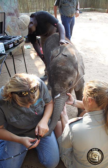 cj-elephants-shawu-scope-14-febr17-99-copy