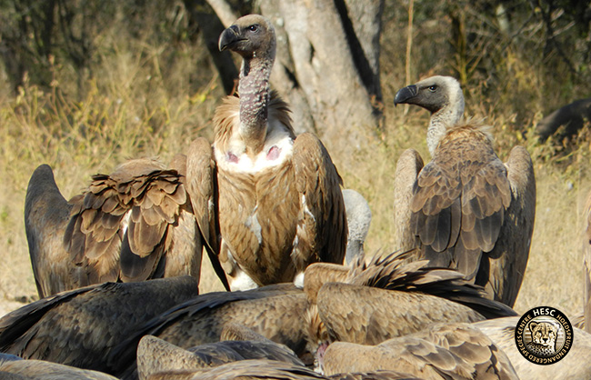 HESC_-Vulture-Resturant-.-1