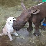 GlobalGiving Foundation campaign – Be Kind to Rhinos