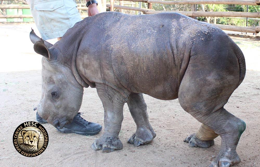 Esme-the-Rhino