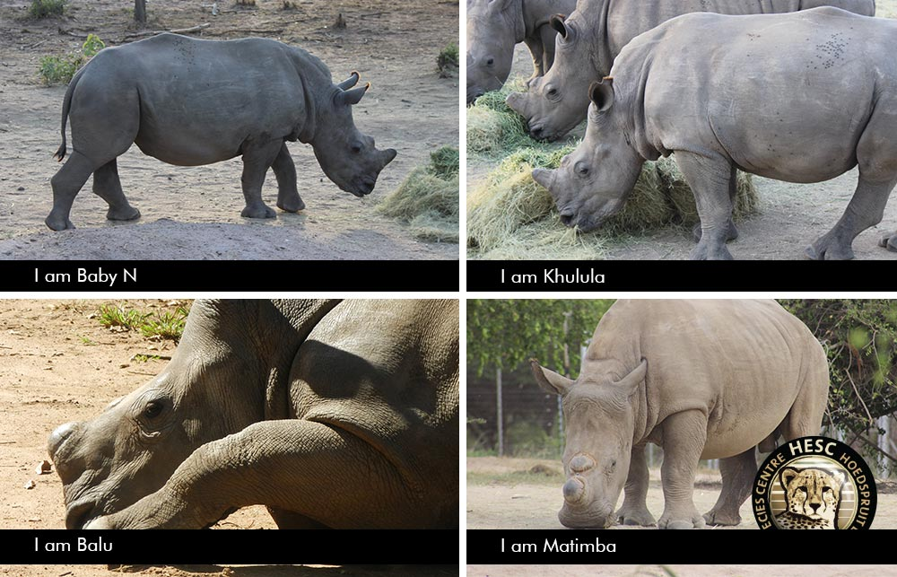 Rhino-Update-February-2018_BabyN_Khulula_Matimba_Balu