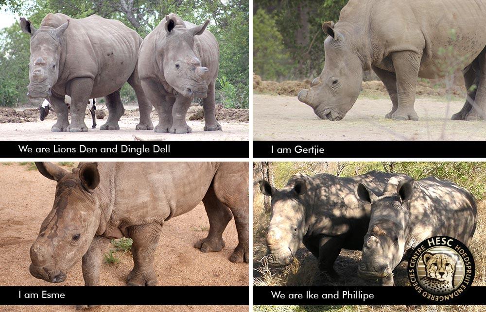 Rhino-Update-February-2018_Ike_Philippe_Esme_Gertjie