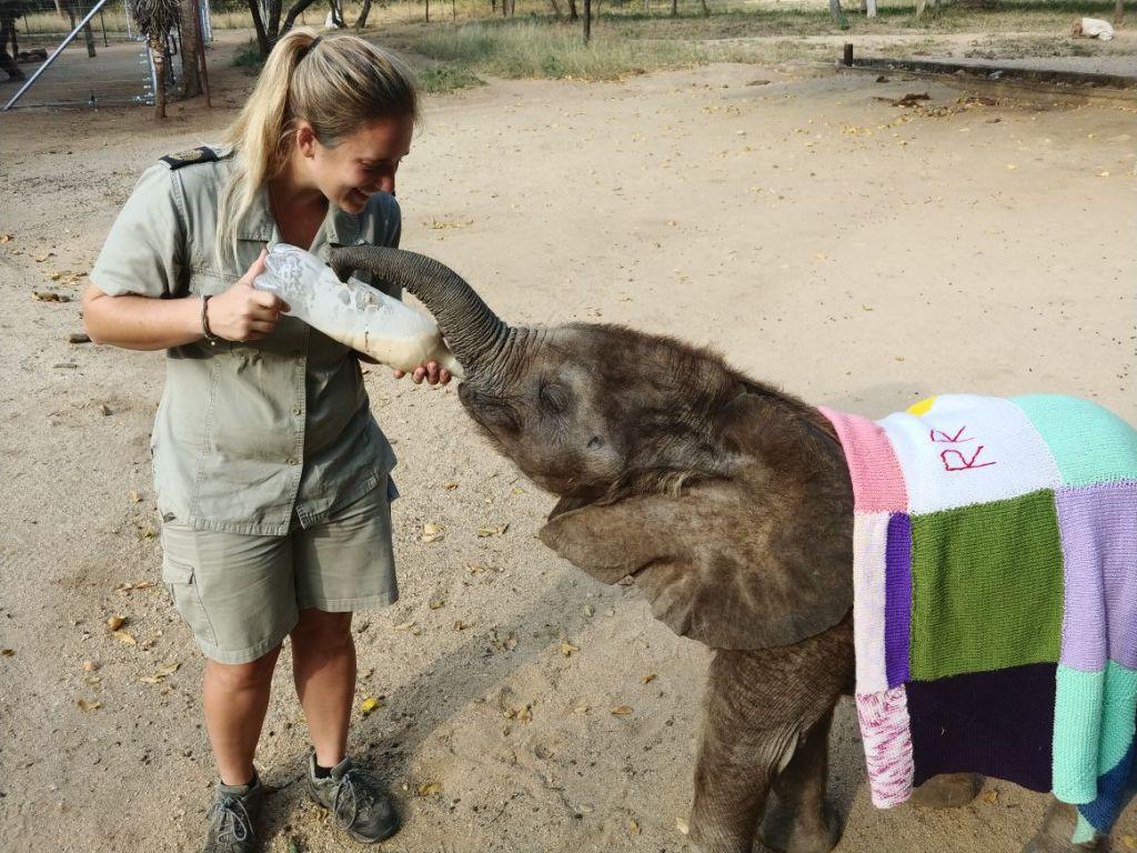Linri feeding orphaned elephant Mopane