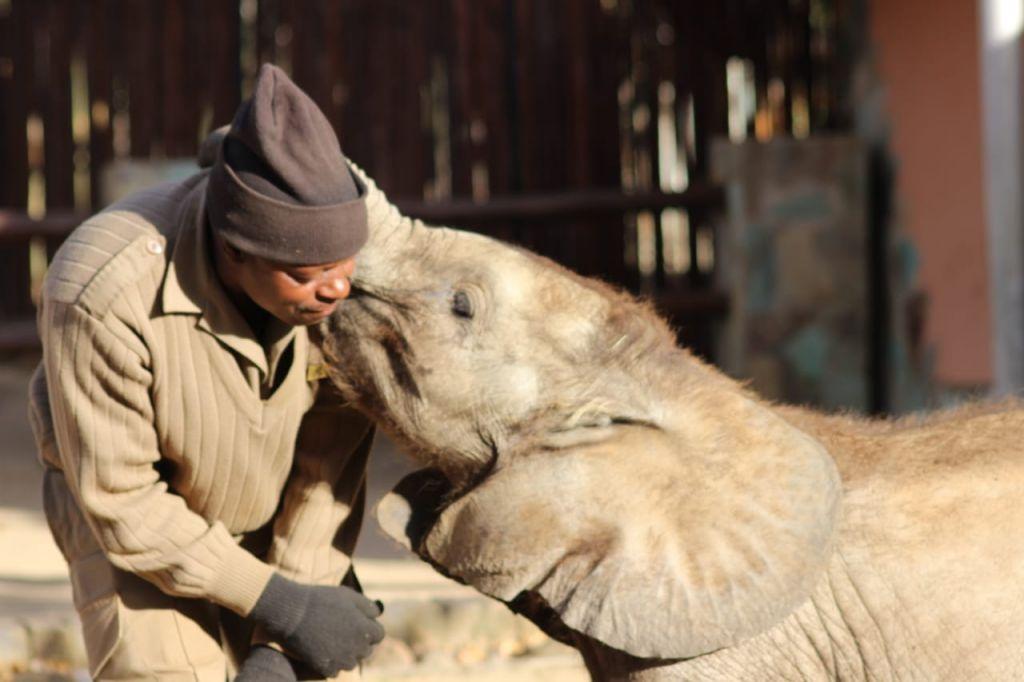 Joshua with orphaned elephant Mopane, having a special moment