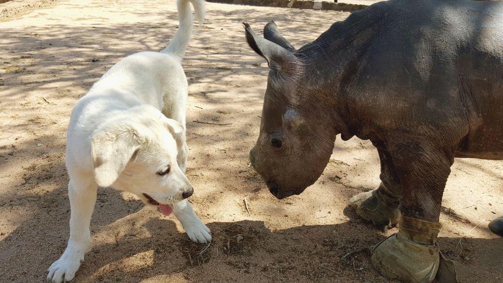 Esme_David_Rhino_and_Dog