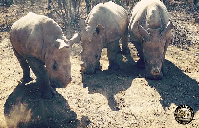 Khulula_Olivia_Nhlanhla_rhinos