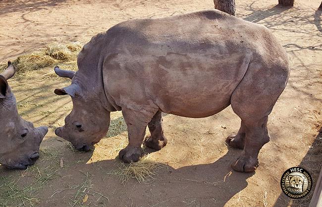 Nhlanhla_HESC_Rhino