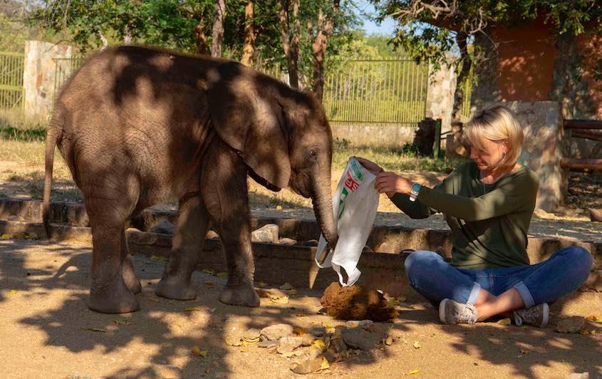 Mopane_elephant_dung