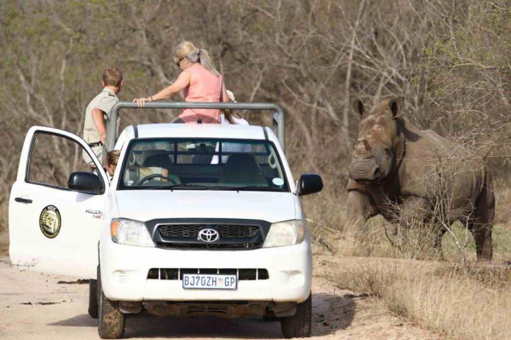 Rhino_survivors_release_into-wild