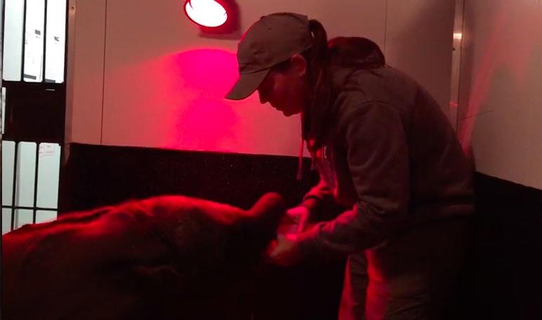 Megan_feeding_orphaned_elephant