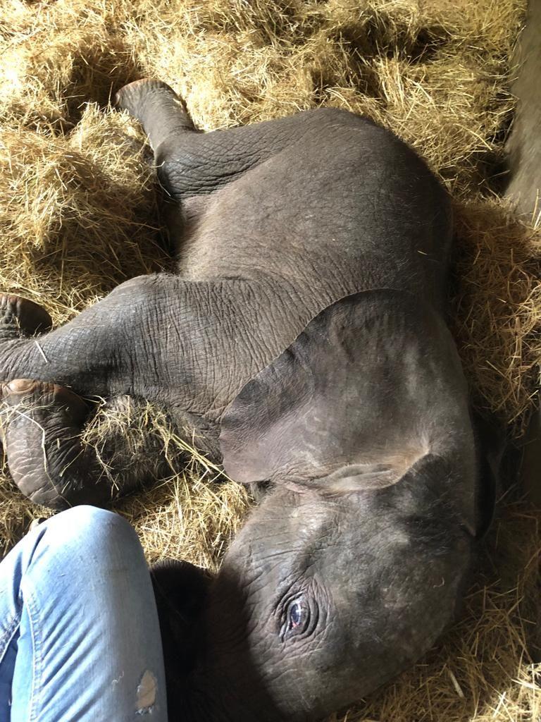 Baby-elephant_Sleeping