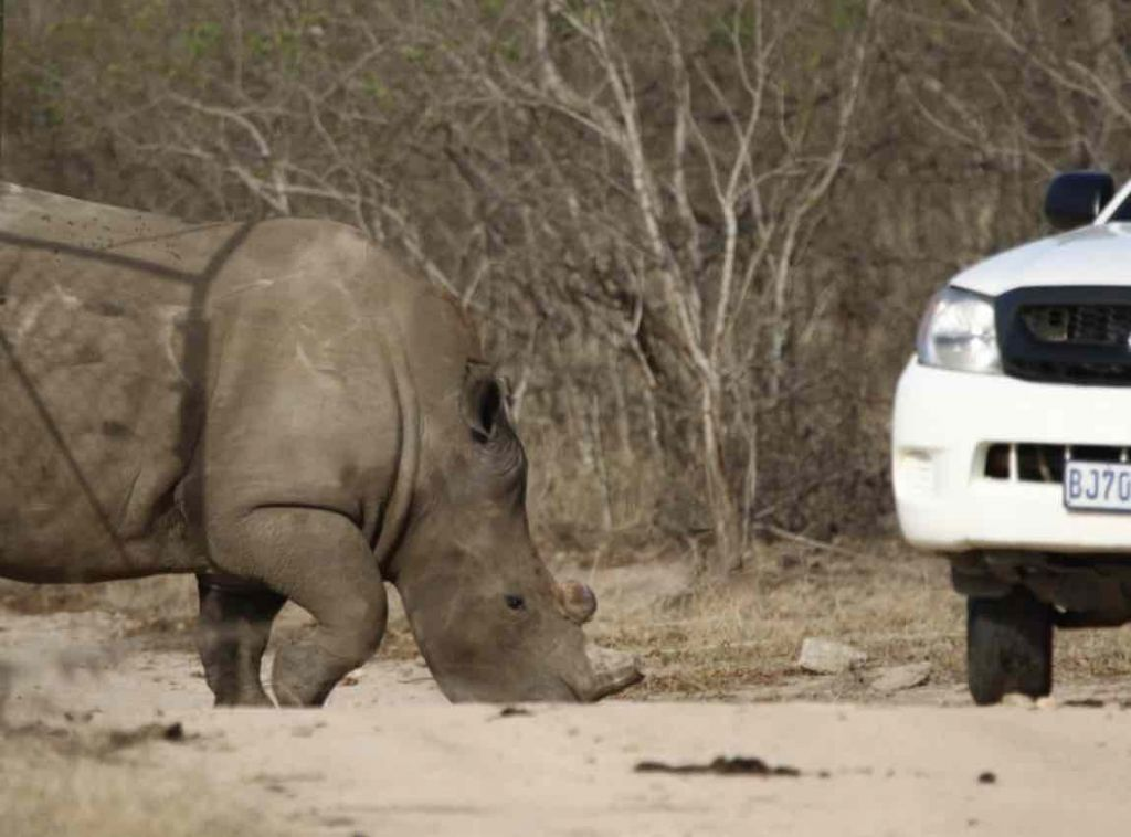 RHino_survivors_released_Back_into_wild_by_HESC