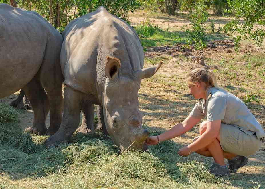 Linri_curator_feeding_rhinos_hesc