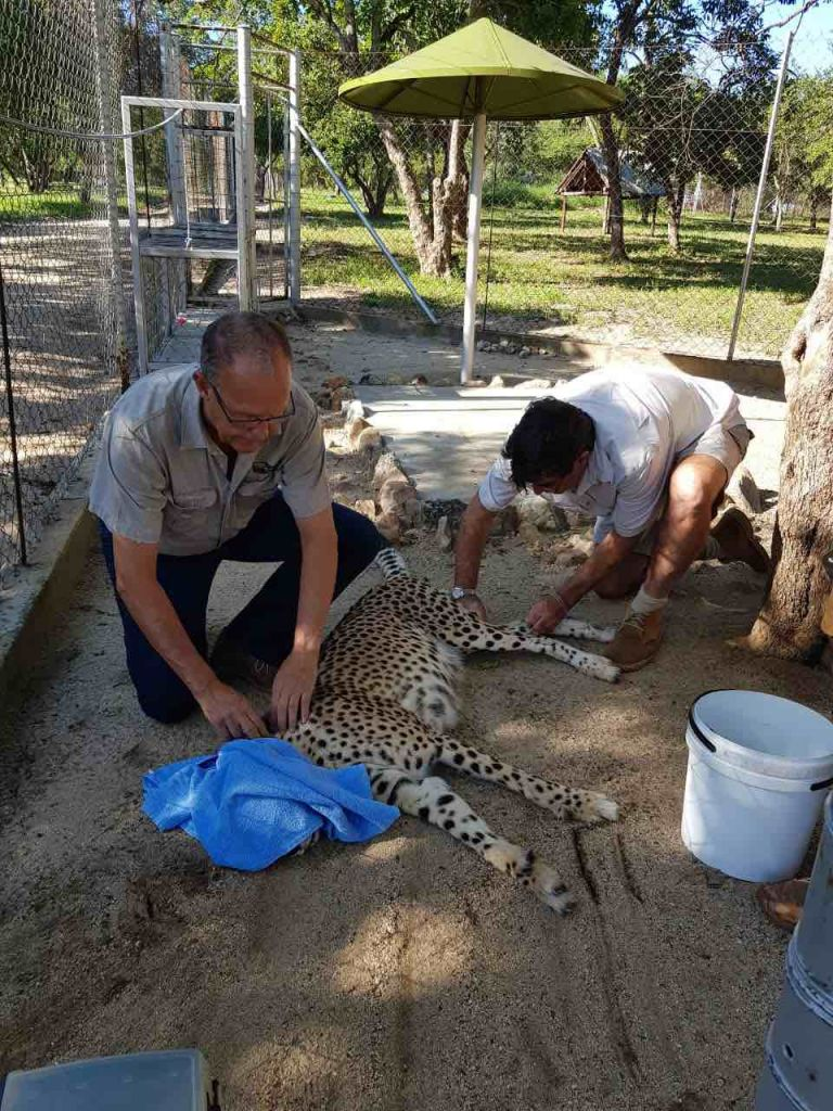 Cheetah_Conservation_HESC
