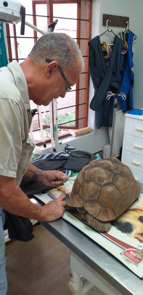 Dr_rogers_tortoise_Vet
