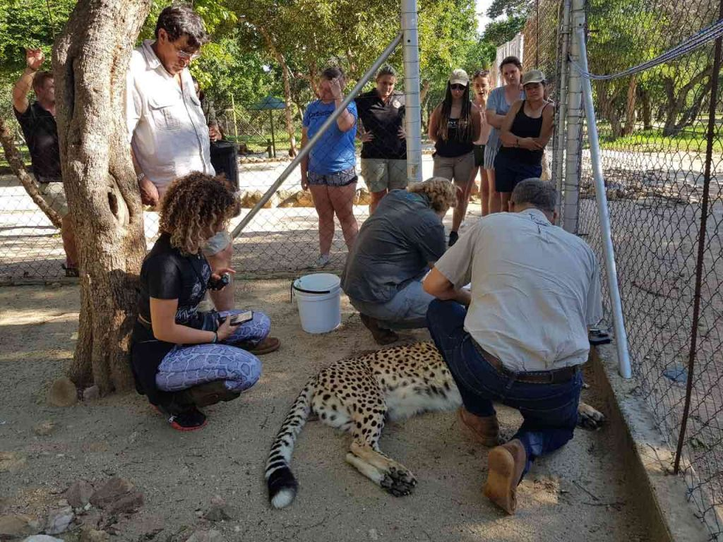 HESC_VOlunteer_Programme_Cheetahs