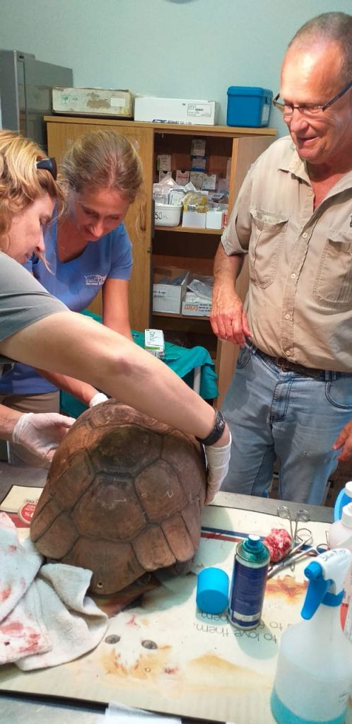 Wildlife_Vet_tortoise_tumour_HESC