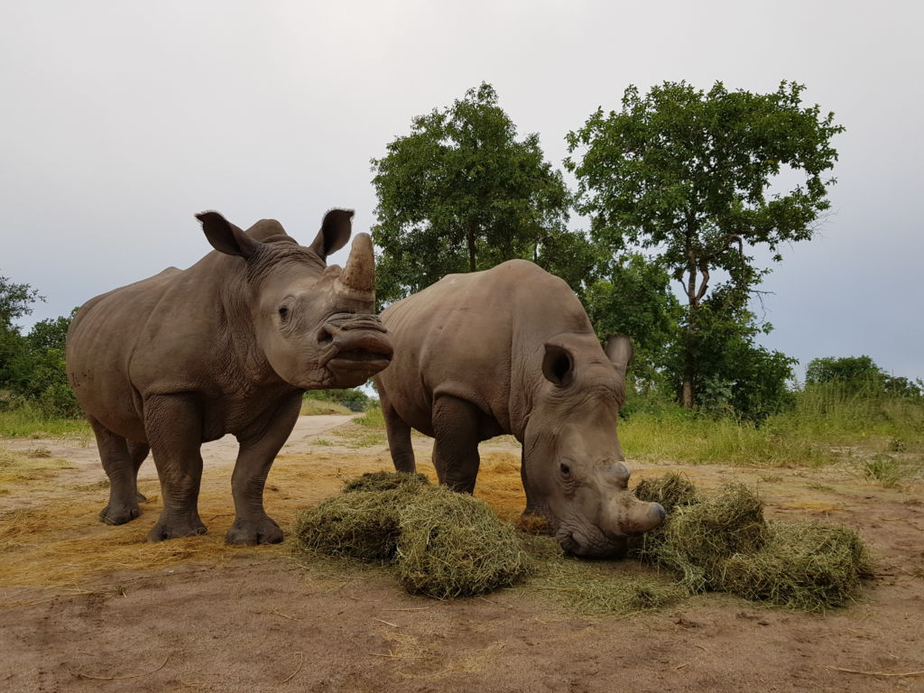 Gertjie_Matimba_ Rhinos