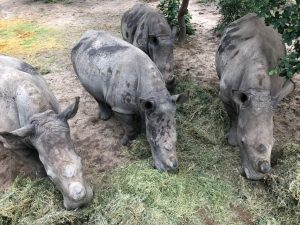 Read more about the article THE KINDNESS OF INDIVIDUALS IN THE RHINO CRISIS