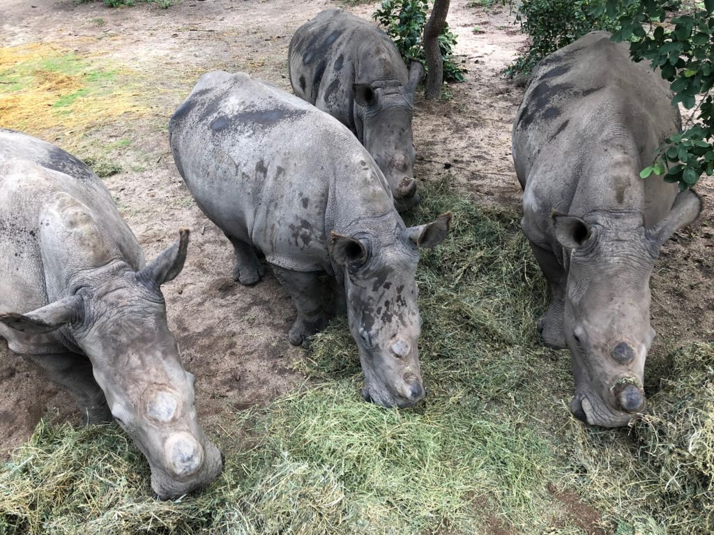 THE KINDNESS OF INDIVIDUALS IN THE RHINO CRISIS