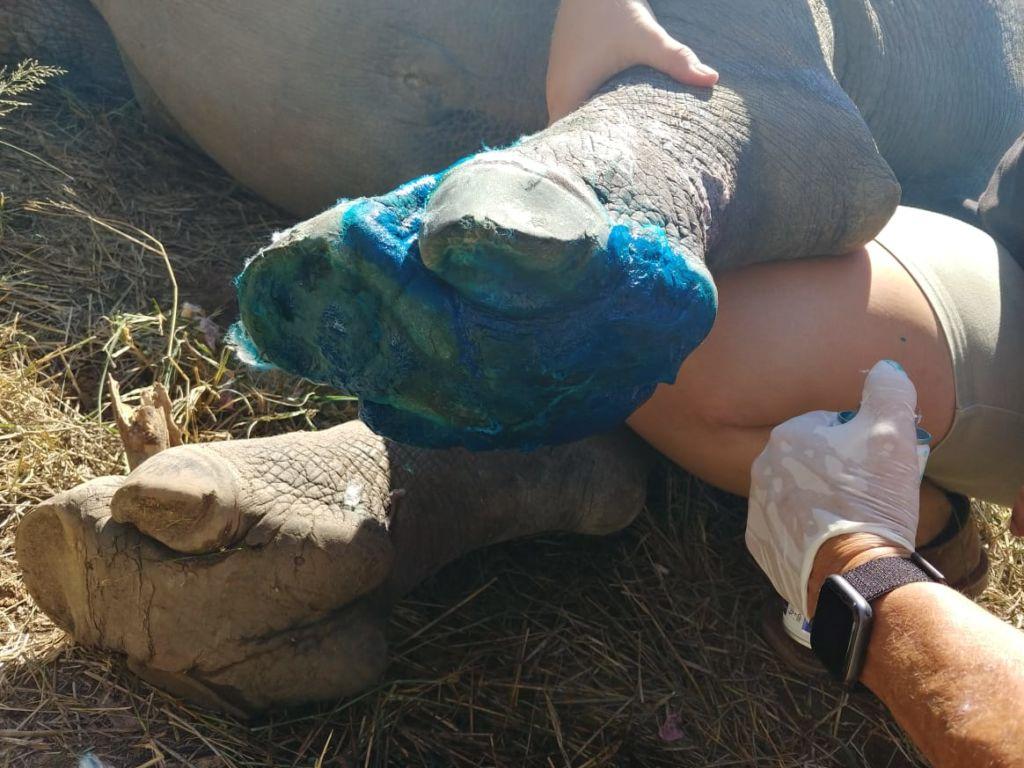 Esme's Bandaged Foot