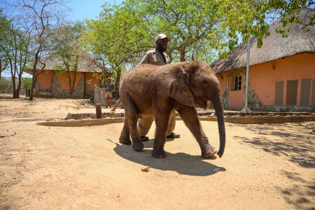 FIRST DEDICATED ELEPHANT NURSERY IN SOUTH AFRICA TO BE ESTABLISHED AT JABULANI