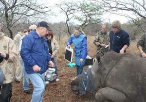 TWO_REHABILITATED_RHINOS_RELEASED_BACK_INTO_THE_WILD_by_HESC_97505103640eaf4c6d941413efc094ca2